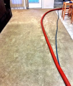 Before TWPro Carpet Cleaning Did a Carpet Cleaning in Wake Forest, NC