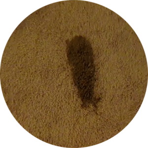 Carpet Cleaning Service Company in Raleigh, Wake Forest, Knightdale, Xebulon, Garner, Wendell, NC