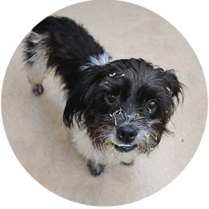 Pet Odor Removal & Pet Stain Removal Service Company in Raleigh, Wake Forest, Knightdale, Xebulon, Garner, Wendell, NC